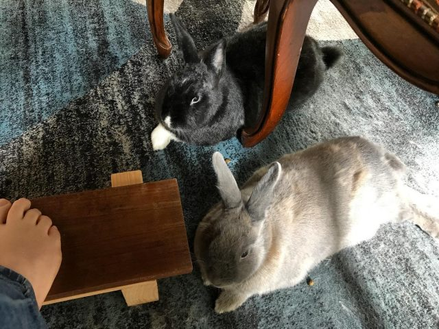 I'm sitting at the table for work and LEGO with the buns at my feet ❤️🐰